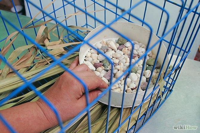 Как обустроить жильё для кролика