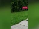 Олень сбежал в Ленинском районе Челябинска (VHS Video)