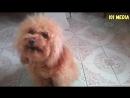 Приколы с животными 2018 Как говорят животные Подборка Приколов про собак 2018 Собаки говорят МАМА