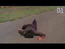 Фильм ужасов Дети кукурузы (1984).31 канал (18 )