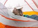 Как два бездомных котенка стали знаменитыми путешественниками