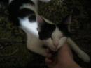 Милый и ласковый котик в добрые руки!