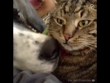 Когда в доме пёсики и котики