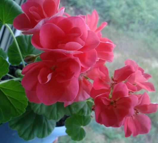Цветы у Ликки F1nO0kohA5w