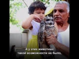 Пракаш Амте вот уже 44 года заботится об осиротевших детенышах диких животных