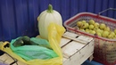 Выпуск от 17 08 18 Где продать овощи с огорода Стерлитамакское телевидение