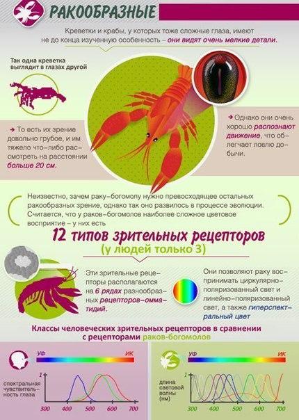 Как животные видят мир. Большинство млекопитающих не отличают красный цвет от зеленого. Они давно утратили эту способность, присущую птицам, рыбам и рептилиям. Ведь их далекие предки, населявшие