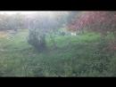 Крошка Сью - и один в поле воин