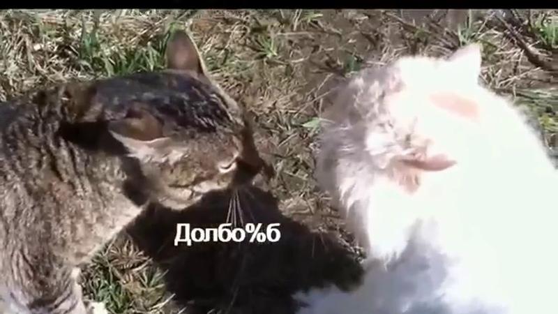 кот матерится