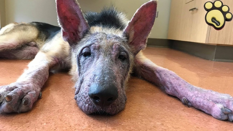 Puppy Abused By His Owner - And Then Many Weeks Caged At A Vet