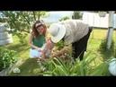 Садовые хитрости - как реже поливать огород Солнечно. Без осадков, НТВ