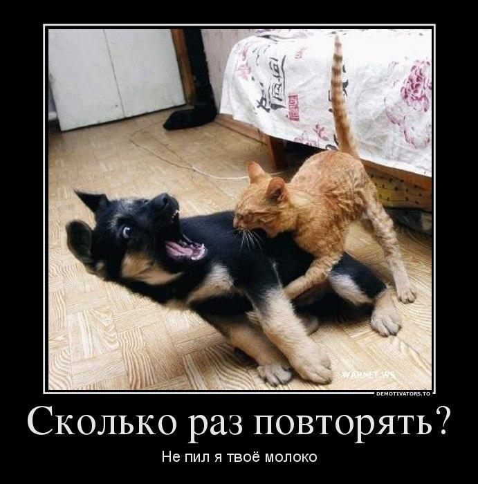 После Кремля собака трахнула голую хозяйку карими