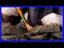 Палеонтологи нашли окаменелое яйцо динозавра в сибири