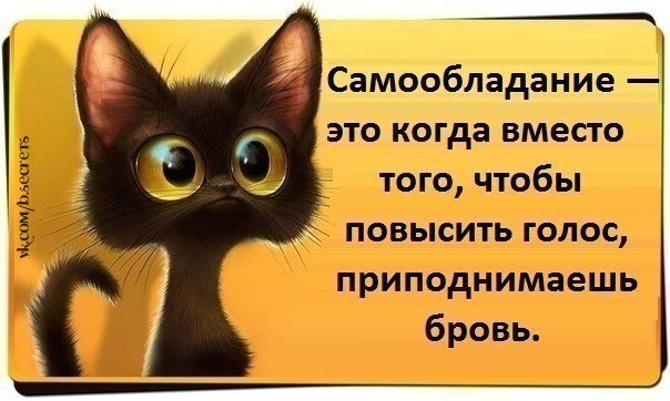 http://cs322527.vk.me/v322527899/3f8a/aFodPYD_CX4.jpg