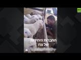 La soldatesque youpine batifole et fait la fête sur les réseaux sociaux alors que les Palestiniens meurent