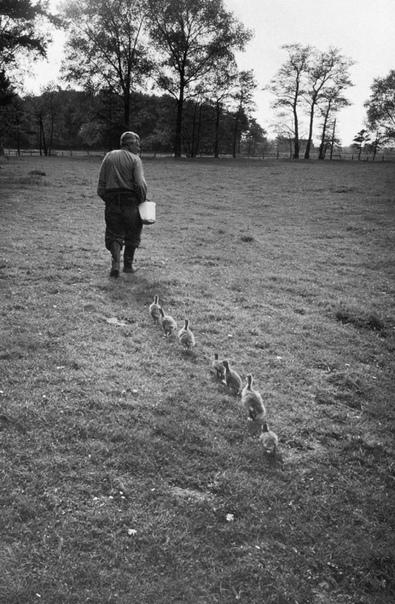 Венский ученый и специалист по поведению животных, доктор Конрад Лоренц с гусятами, которые принимают его за свою маму,