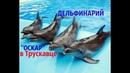 Дельфинарий Оскар в Трускавце. Как дельфины танцуют и поют. Новая программа 2018 года.