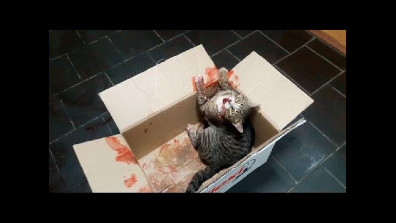 «Хотя бы укололи обезболивающее». В минской ветстанции отказали в помощи сбитому коту