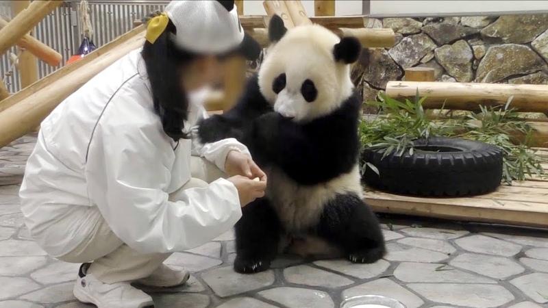 【子パンダ✨】🐼結浜のミルクタイム🎀🍼✨【ノーカット♪】 Giant Panda -Yuihin-