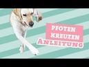 Hund Pfoten kreuzen beibringen