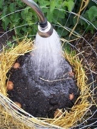 Башня для картофеля Вам понадобится:1. Металлическая сетка2. Солома3. КомпостПридайте металлической сетке форму трубы, закрепите. Диаметр - 75-90 смУкладываем солому по бокам, а внутрь этого