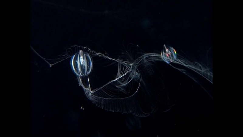 BBC Голубая планета Фильм третий Открытый океан