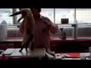 Тайский кот на выставке TICA 1 й и 2 й дни осмотр экспертами Funny Cats
