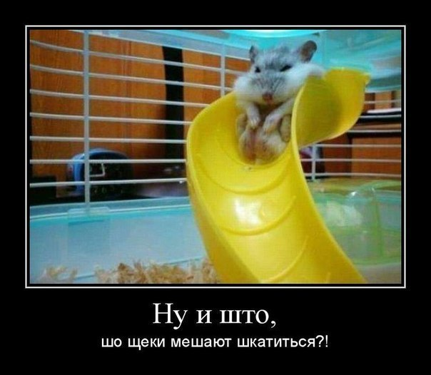 http://cs14115.userapi.com/c7008/v7008113/1e52/GnJXiUp-HwA.jpg