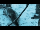 Охота на кабана .