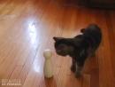 FroliCat BOLT Laser Cat Toy at Bed Bath  Beyond