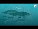 Подводный шум убивает китов