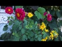 Мой маленький 4 сотки прекрасный сад в стиле Шебби Для вас звучит ОСЕННИЙ БЛЮЗ