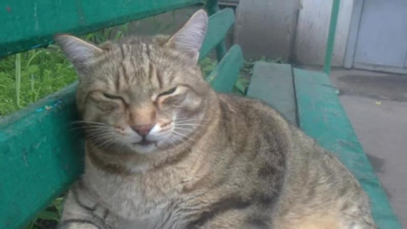 котик толстячок сидит на лавке