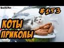 Смешные Приколы С Котами и Кошками ДО СЛЁЗ Котэ Приколы 2018 Funny Cats
