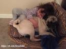 если собаку не пускают в кровать к ребенку, то ребенок придет в кровать собаки