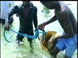 Экстремальная подводная охота на задержке дыхания