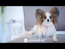 QR адресник для тварин від animal