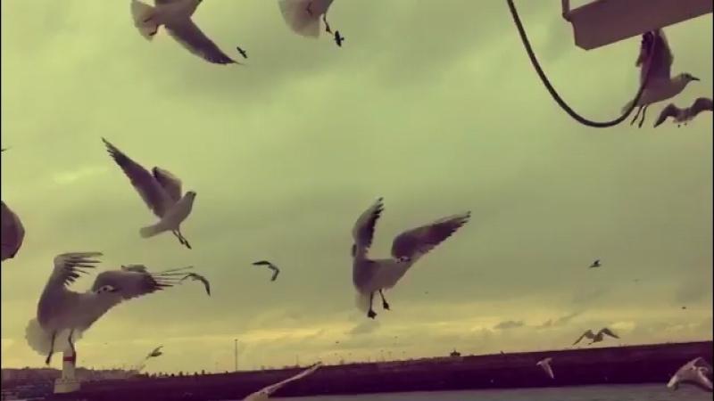 Отпусти своих птиц на волю❤️