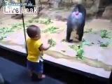 Малыш и обезьяны Приколы с детьми Дети и животные