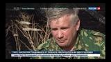 В России черные лесорубы уничтожают даже реликты