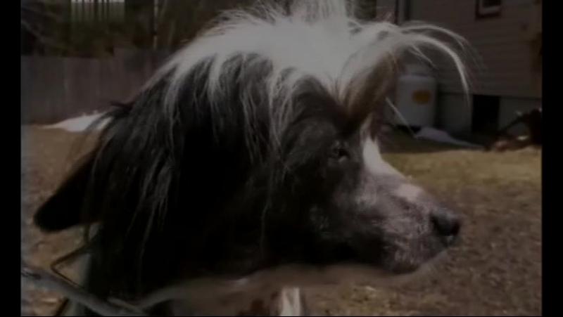 Введение в собаковедение (Серия №14)