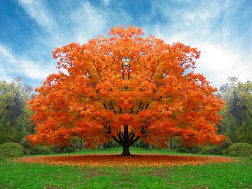 Autumn time ... - Pagina 2 IYhZOY4zHS0