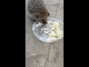 Ёжик и еда
