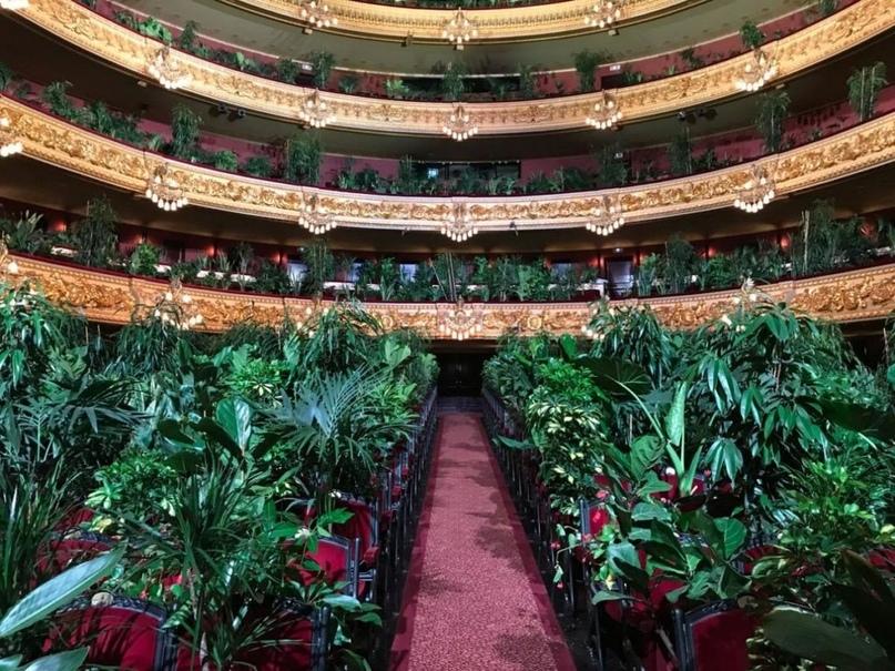 Концерт для растений в оперном театре Барселоны