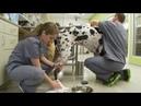 Veterinary techs' work A 'labor of love'