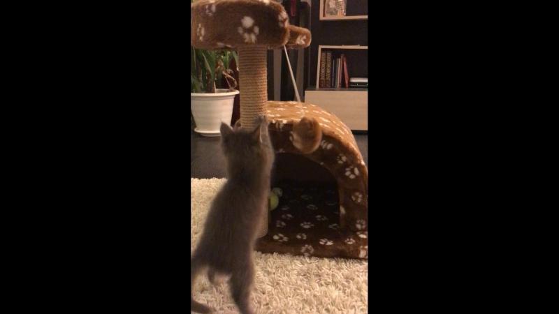 Кошкин дом 🏠
