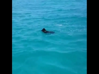 Ever see a wild dolphin play with a dog? Well now you have