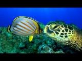 Большое путешествие вглубь океанов / OceanWorld 3D (2009) — природа на Tvzavr
