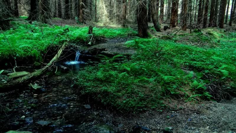 Relax _ Spa. Звуки природы. Живой лес. Музыка для сна. Музыка для глубокого сна. Sleep. Deep sleep.