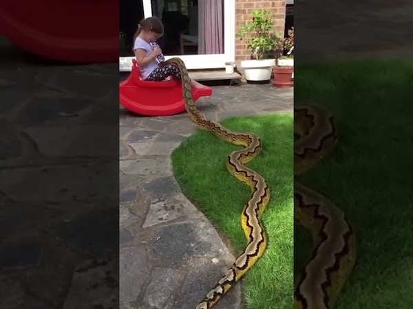4 YEARS OLD GIRL AND PITON!